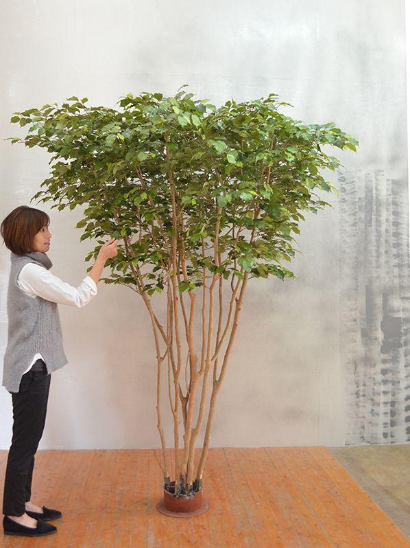 2017年2月 東京都 武蔵野市 会社様 人工樹木 2m